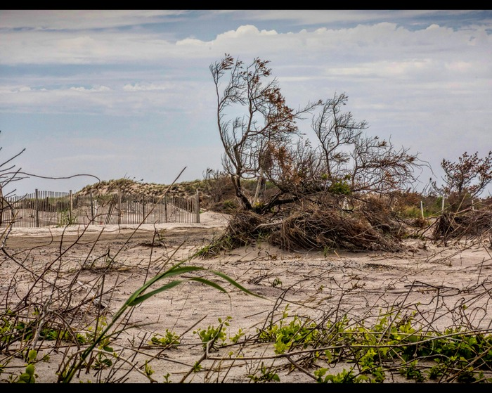 Robert Moses Bush