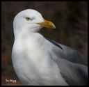Seagull for facebook